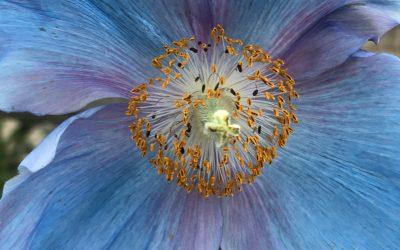 Sunday Meditation: Find Your Inner Light